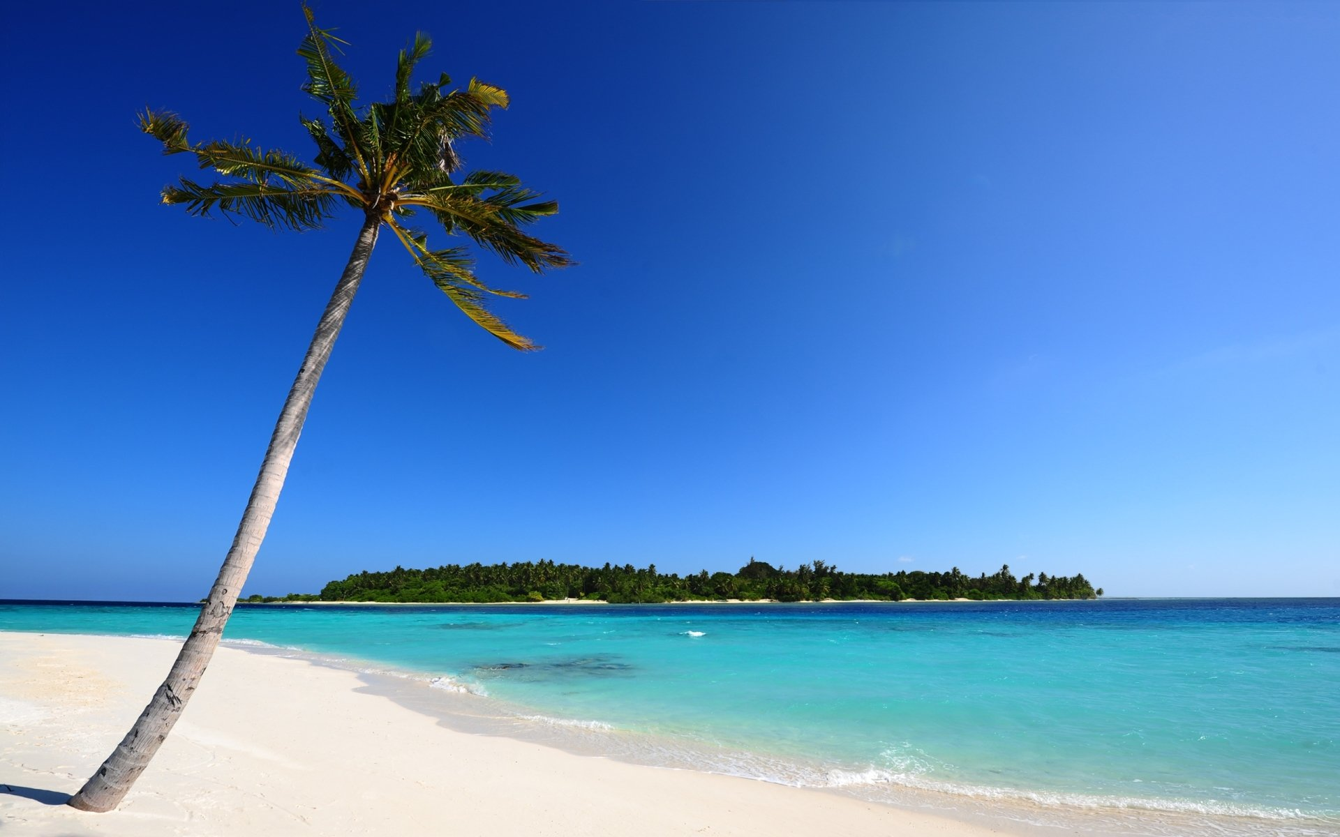 Earth - Beach  Sky Ocean Blue Maldives Island Palm Tree Tropical Sand Wallpaper