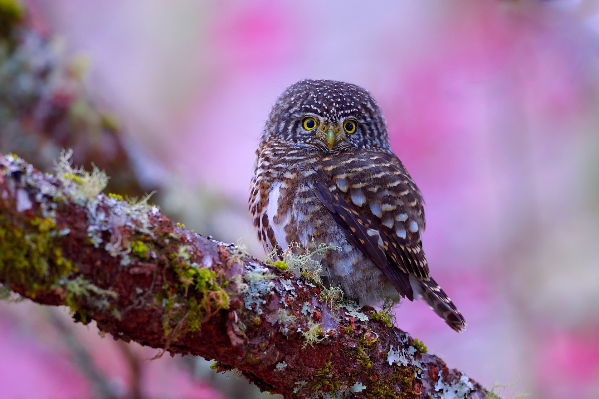 Owl 4k Ultra HD Wallpaper   Background Image   4372x2914 ...
