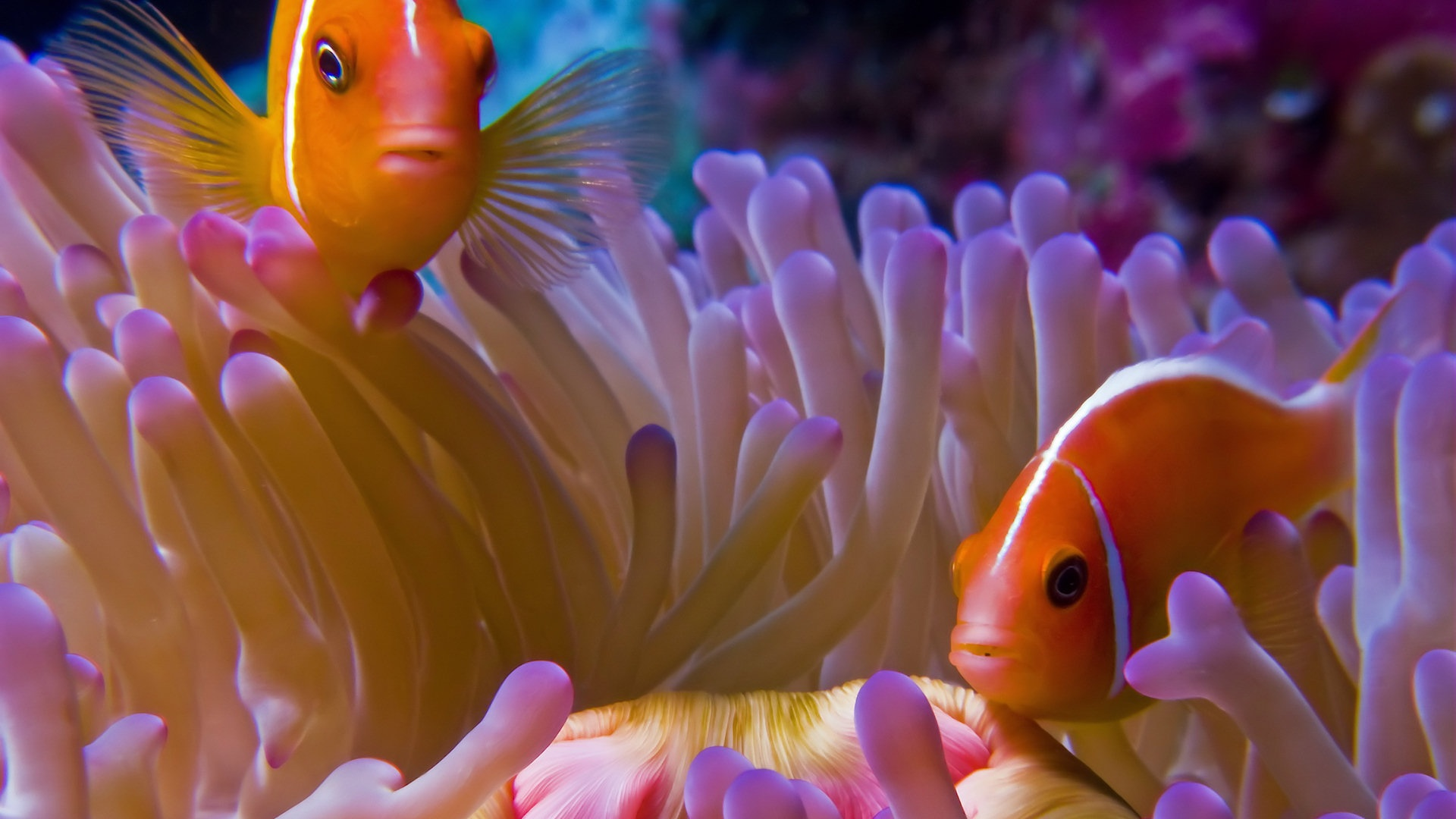 Fish HD Wallpapers Backgrounds Wallpaper  Page