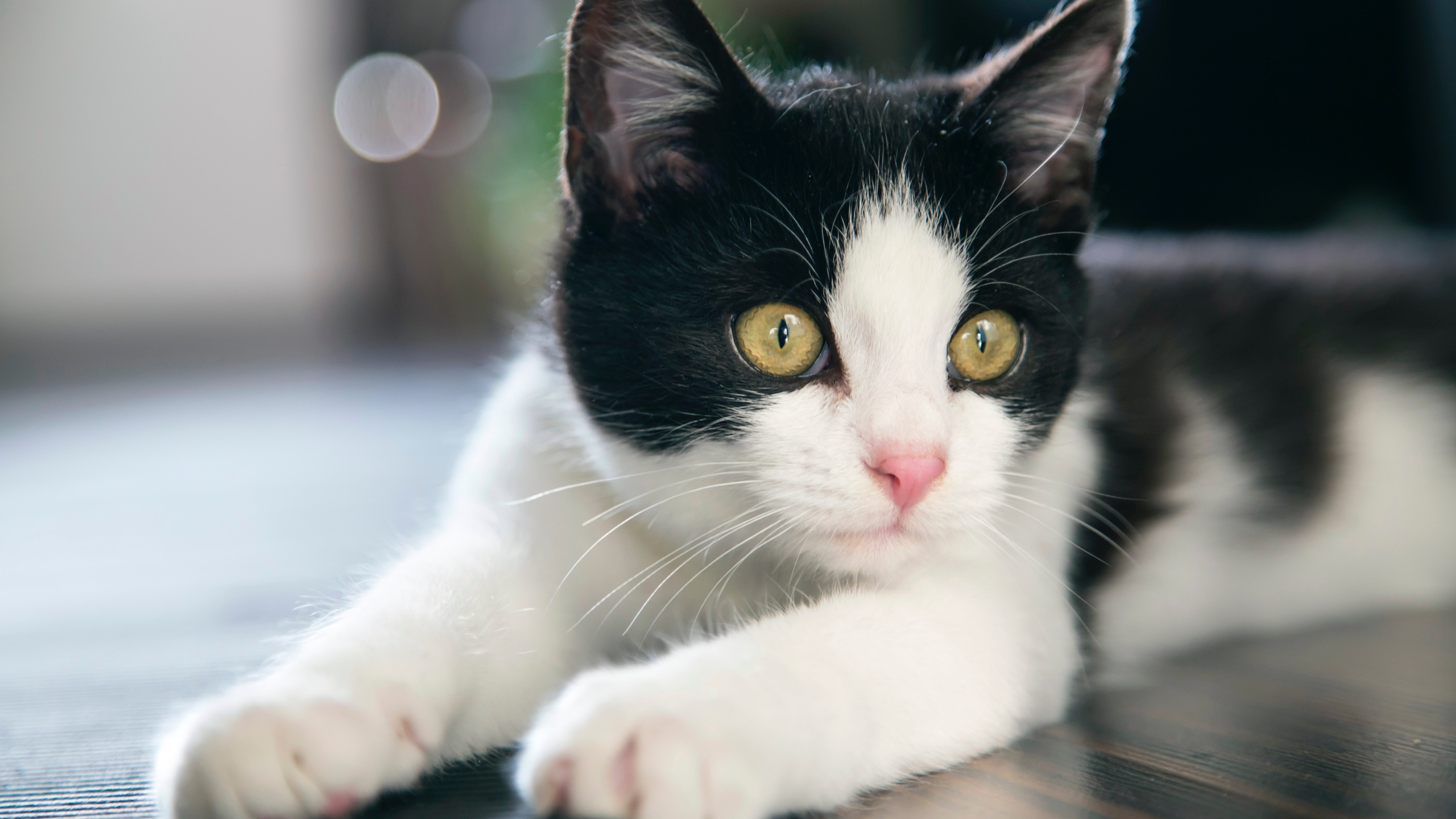 Cute Black And White Cat 5k Retina Ultra Hd Wallpaper Background Image 5120x2880 Id 1026647 Wallpaper Abyss