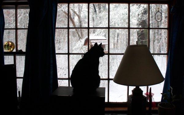 Animal Cat Cats Winter Snow Lamp Window HD Wallpaper   Background Image