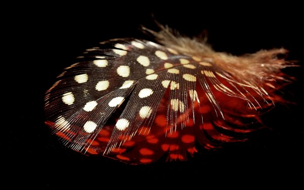 Photography Feather HD Wallpaper   Background Image