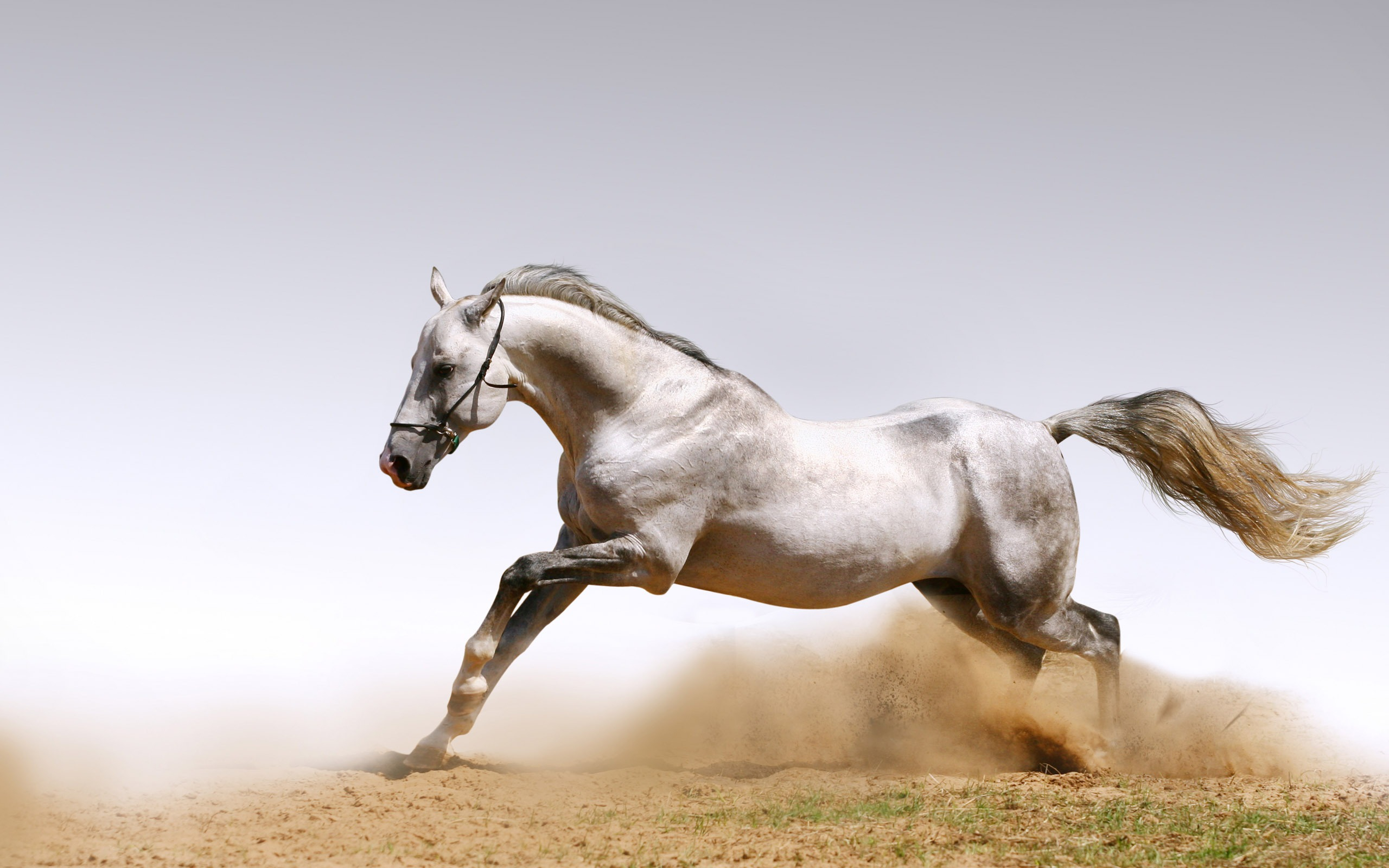 Horse Full HD Wallpaper and Background 2560x1600 ID103288