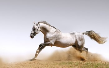 Animal - Horse Wallpapers and Backgrounds ID : 103288