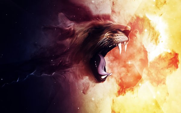 Animal Artistic Face Texture Colors Lion HD Wallpaper | Background Image