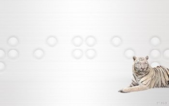 Animalia - White Tiger Wallpapers and Backgrounds ID : 105974