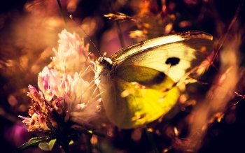 Animal - Butterfly Wallpapers and Backgrounds ID : 106108