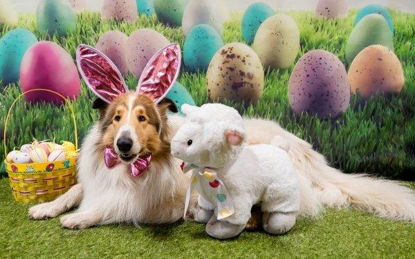 Animal Shetland Sheepdog Dogs Dog Easter Pet HD Wallpaper | Background Image