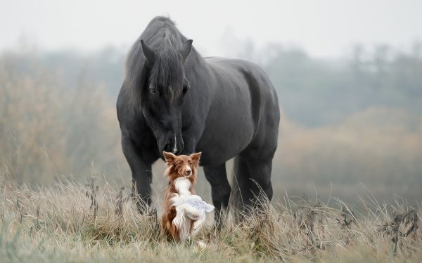 Animal Horse Dog Pet HD Wallpaper | Background Image