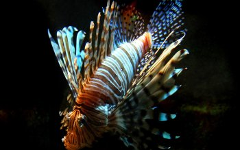 Animal - Fish Wallpapers and Backgrounds ID : 108326