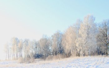 Tierra - Winter Wallpapers and Backgrounds ID : 108344