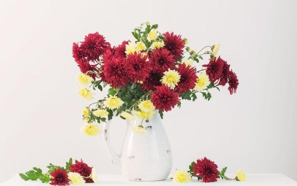 Man Made Flower Chrysanthemum HD Wallpaper   Background Image