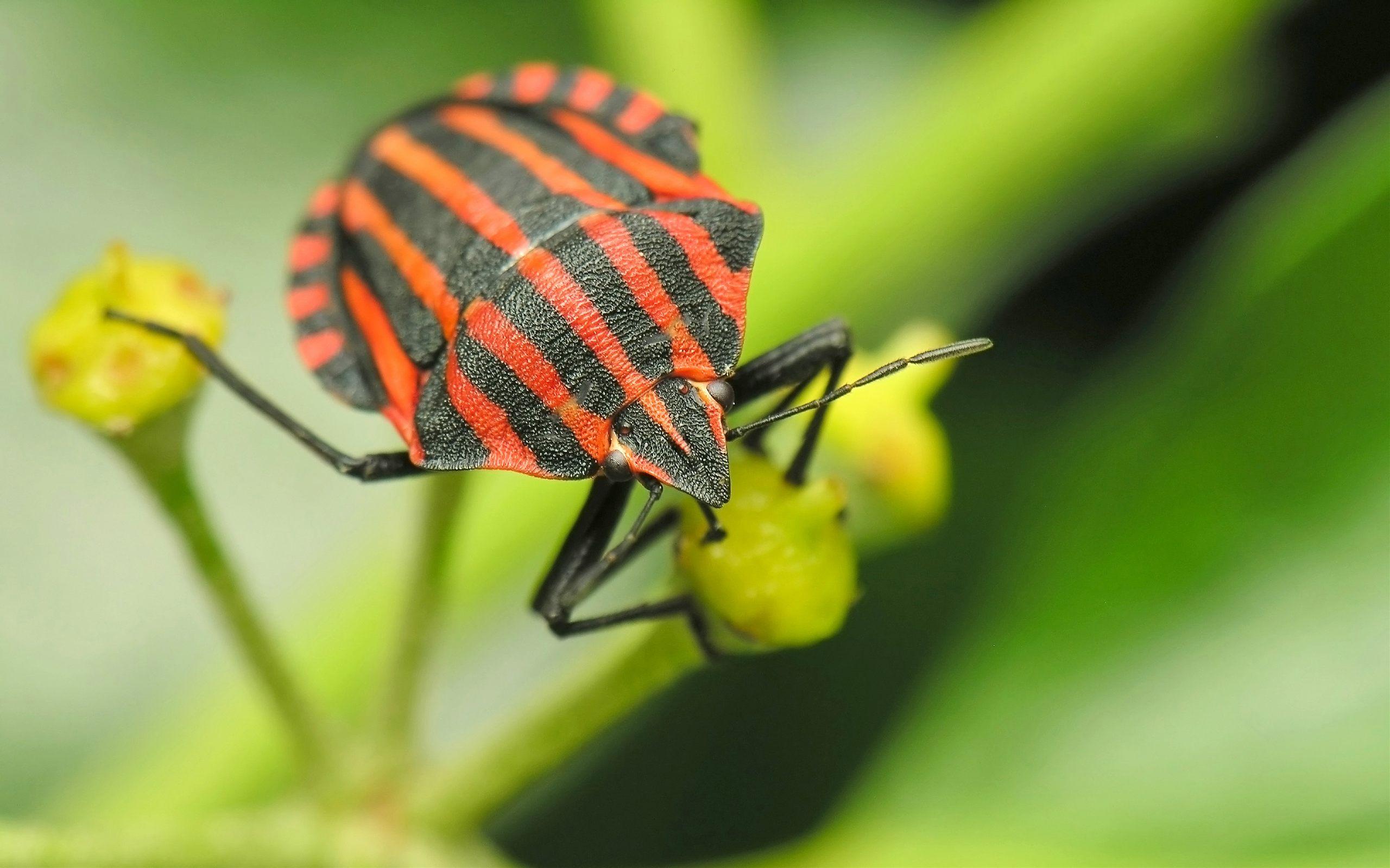 Insect Computer Wallpa...