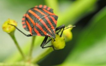 Animal - Insect Wallpapers and Backgrounds ID : 110776