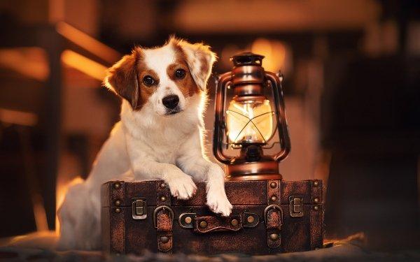 Animal Dog Dogs Pet Lantern Suitcase HD Wallpaper | Background Image
