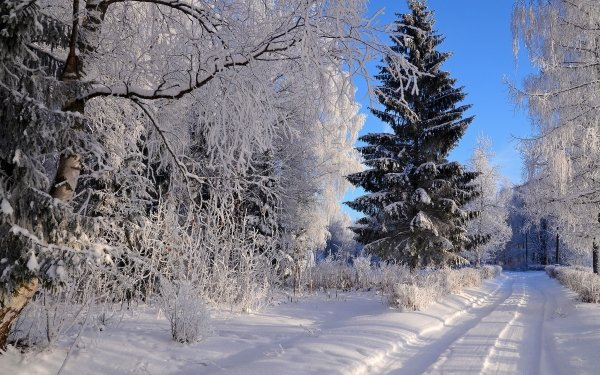 Man Made Path Winter Frost Road Forest Snow Spruce HD Wallpaper | Background Image