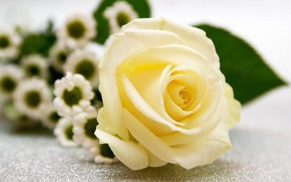 Man Made Flower Rose Bouquet Chrysanthemum HD Wallpaper   Background Image