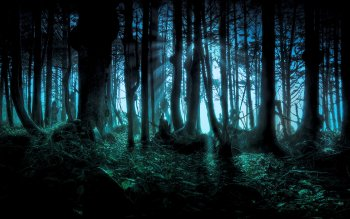 Dark - Forest Wallpapers and Backgrounds ID : 113596