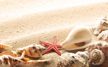 Earth - Shell Wallpapers and Backgrounds ID : 113654