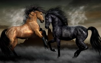 Animal - Horse Wallpapers and Backgrounds ID : 114066