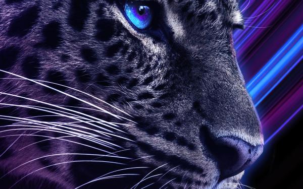 Fantaisie Leopard Fond d'écran HD | Arrière-Plan
