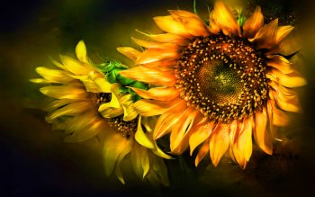 Earth - Sunflower Wallpapers and Backgrounds ID : 115754