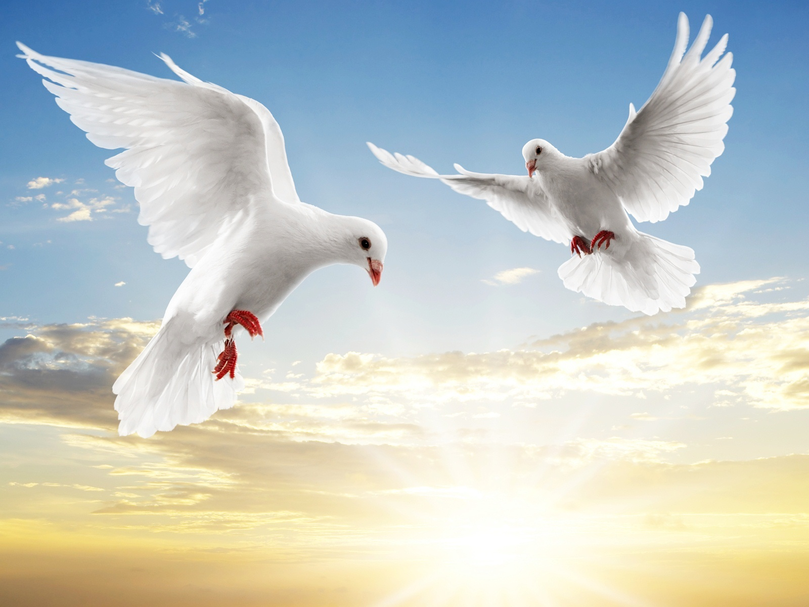 Sky rays dove Birds wallpapers x