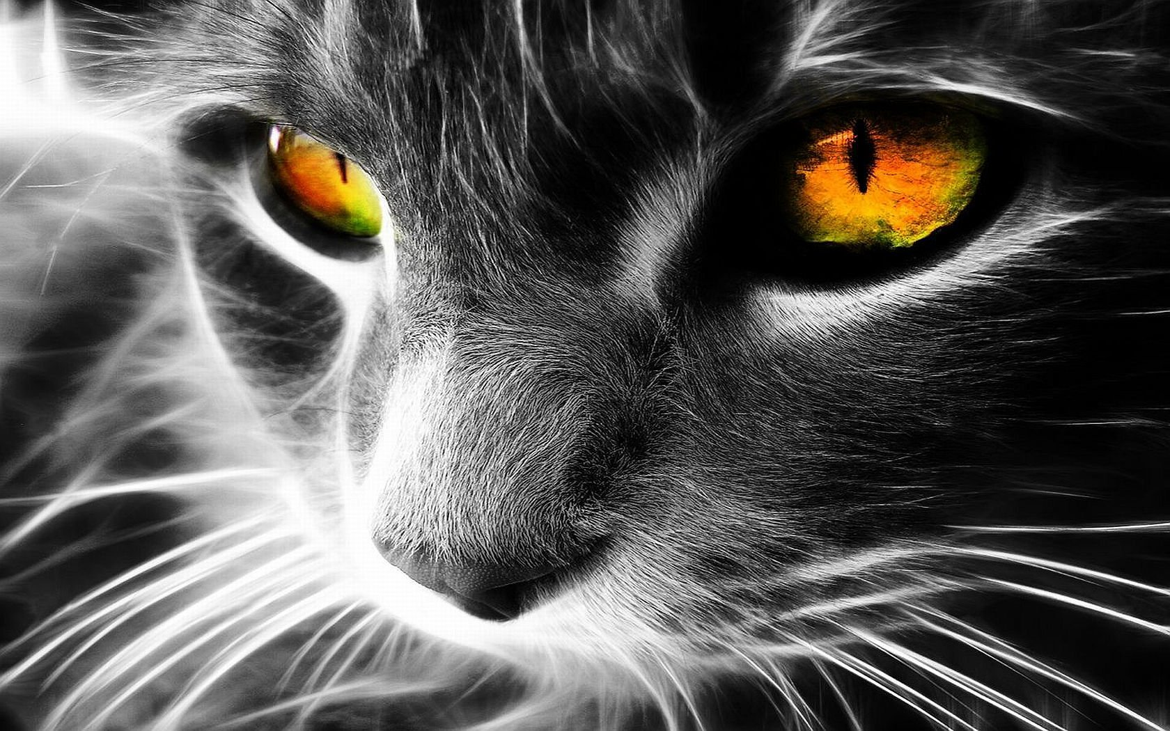Animal - Cat  Artwork Wallpaper