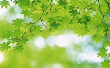Earth - Leaf Wallpapers and Backgrounds ID : 117446