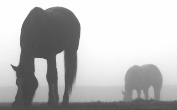 Animal - Horse Wallpapers and Backgrounds ID : 117594