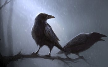 Животные - Crow Wallpapers and Backgrounds ID : 118414