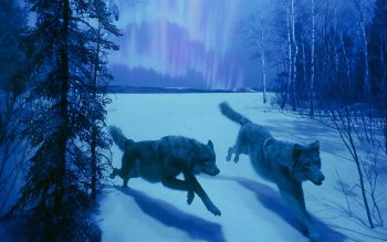 Animal - Wolf Wallpapers and Backgrounds ID : 118758