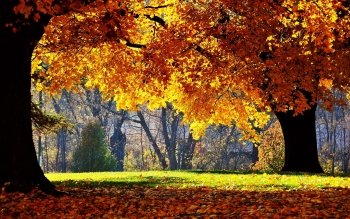 Terra - Autunno Wallpapers and Backgrounds ID : 118808
