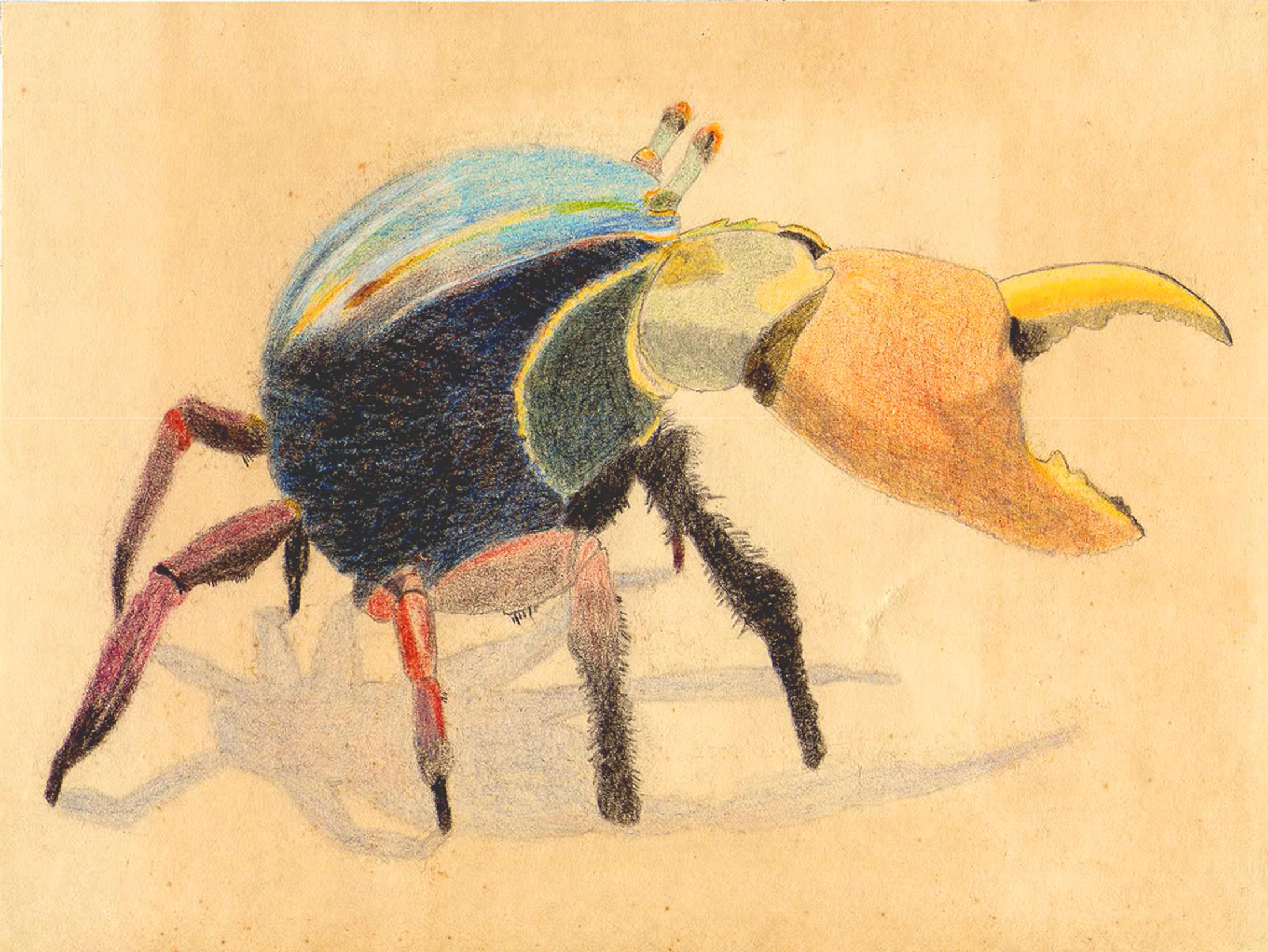 Animal - Artistic  Crab Original Artwork Wallpaper
