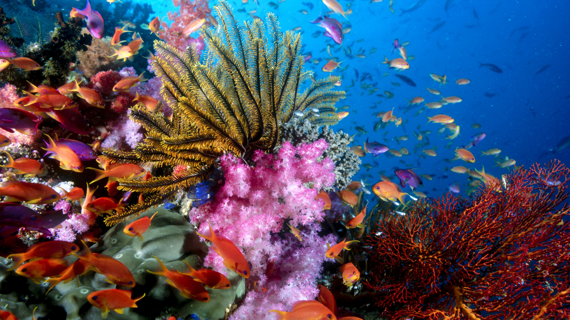 76 Sea Life HD Wallpapers  Backgrounds Wallpaper Abyss