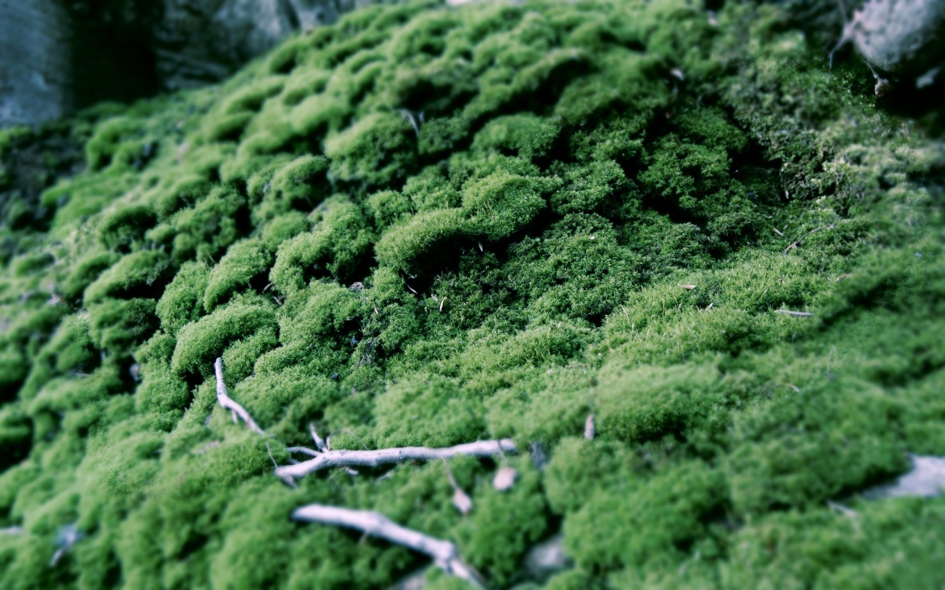 Earth - Moss  Wallpaper