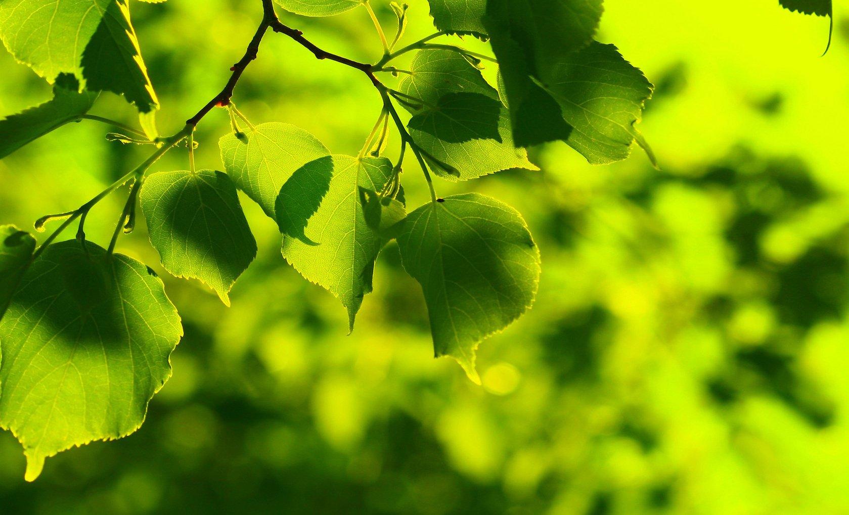 Tierra/Naturaleza - Hoja  Fondo de Pantalla