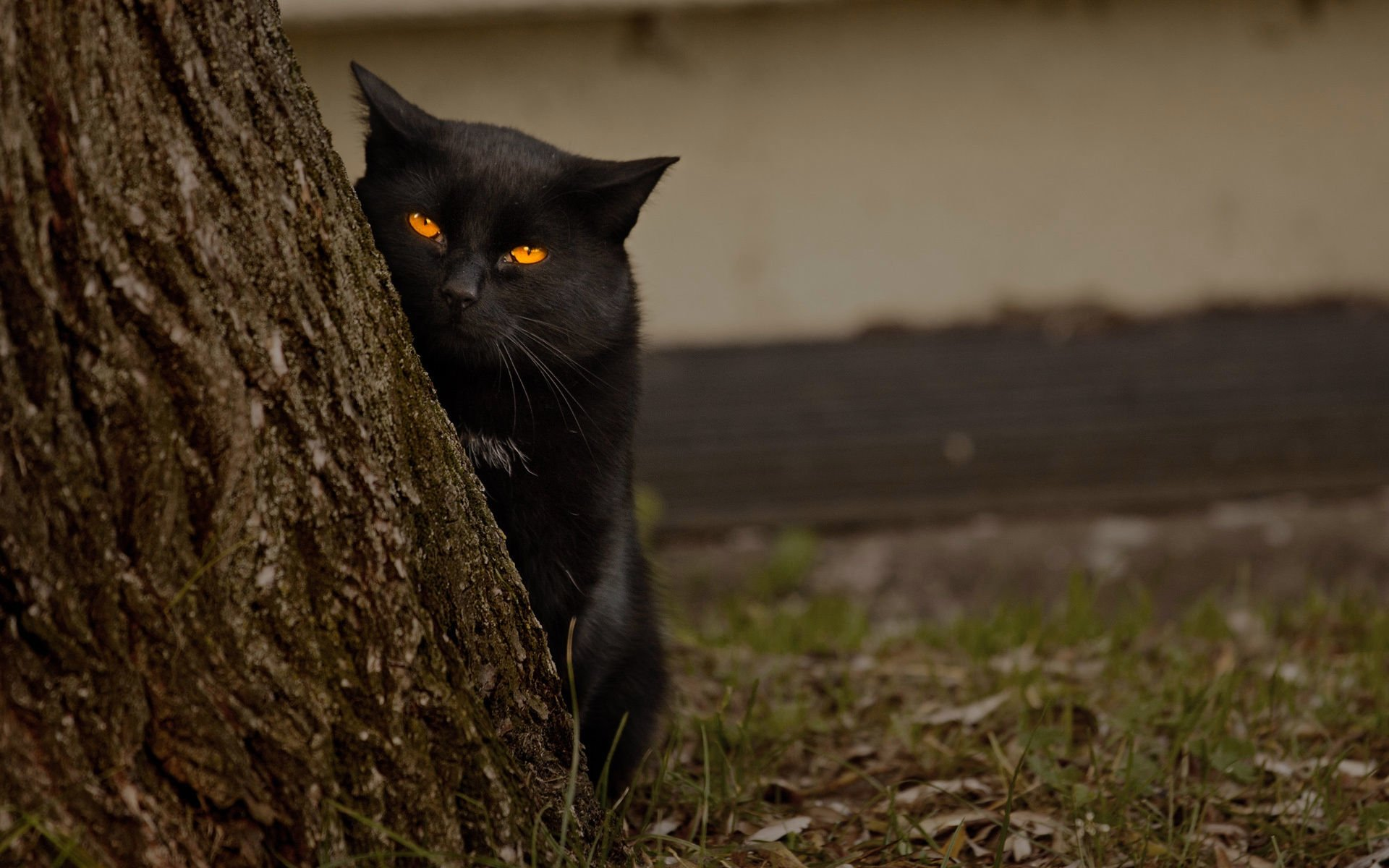 Animal - Cat  Yellow Eyes Wood Wallpaper