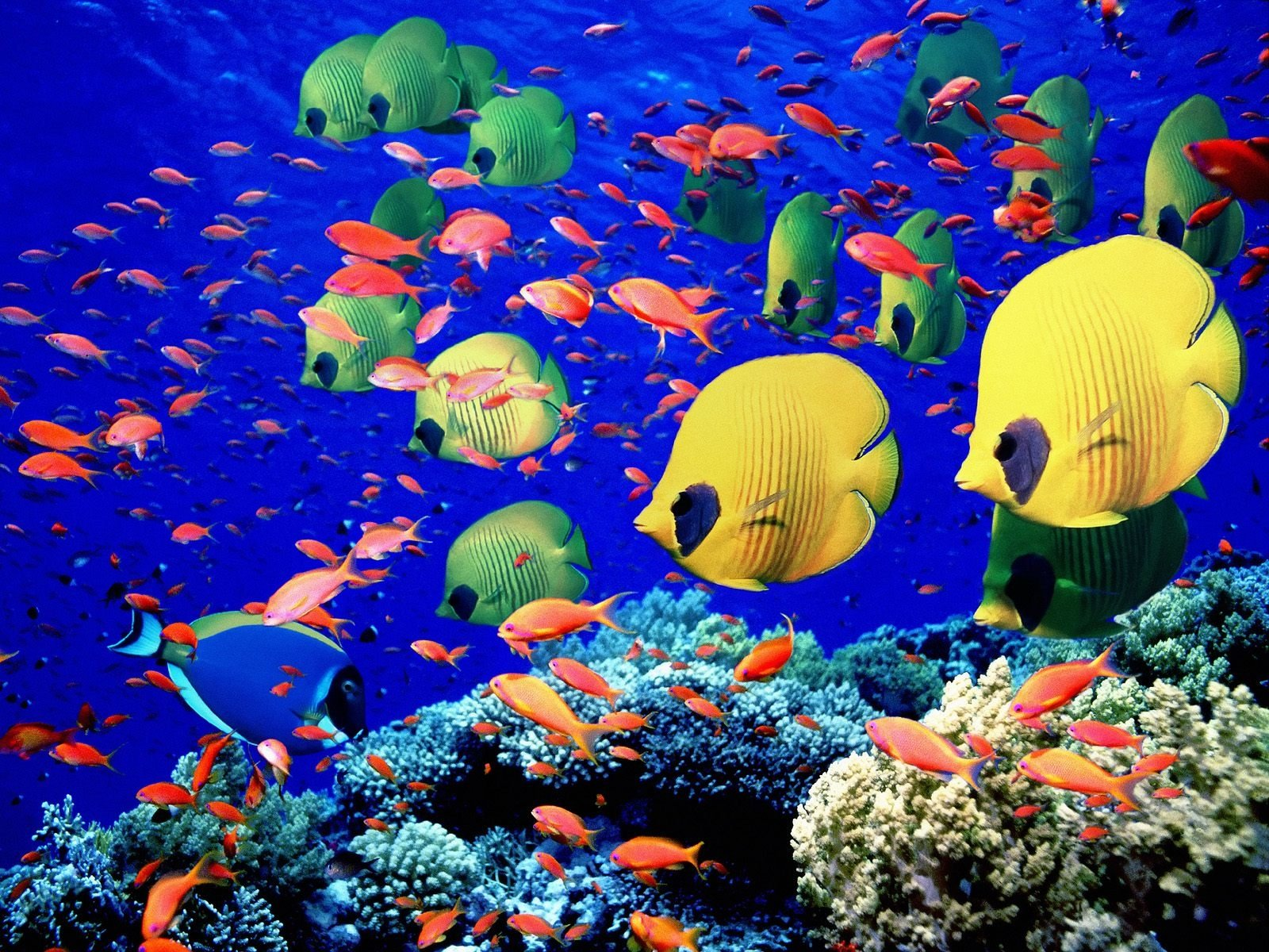 515 fish hd wallpapers | background images - wallpaper abyss