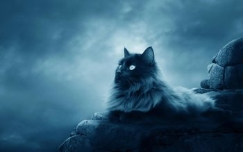 Animalia - Gato Wallpapers and Backgrounds ID : 121678
