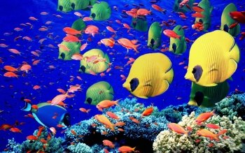 Animal - Fish Wallpapers and Backgrounds ID : 121834