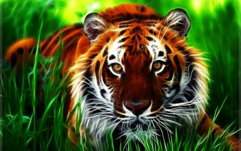 Animal - Tiger Wallpapers and Backgrounds ID : 121868