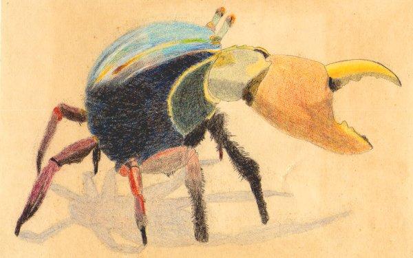 Animal Artistic Original Crab HD Wallpaper | Background Image