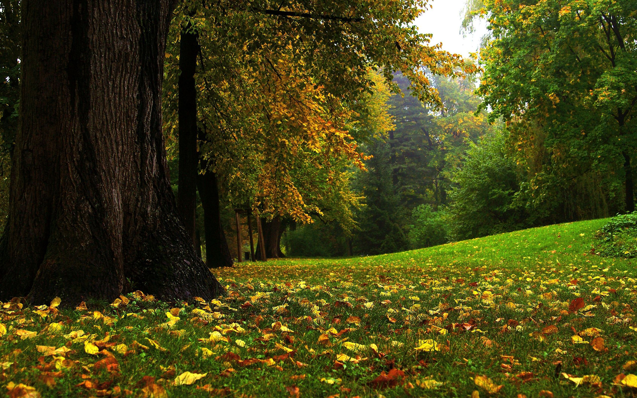forest full hd wallpaper and background image | 2560x1600 | id:122408