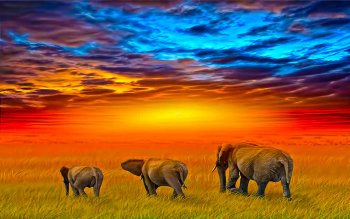Animal - Elephant Wallpapers and Backgrounds ID : 125008