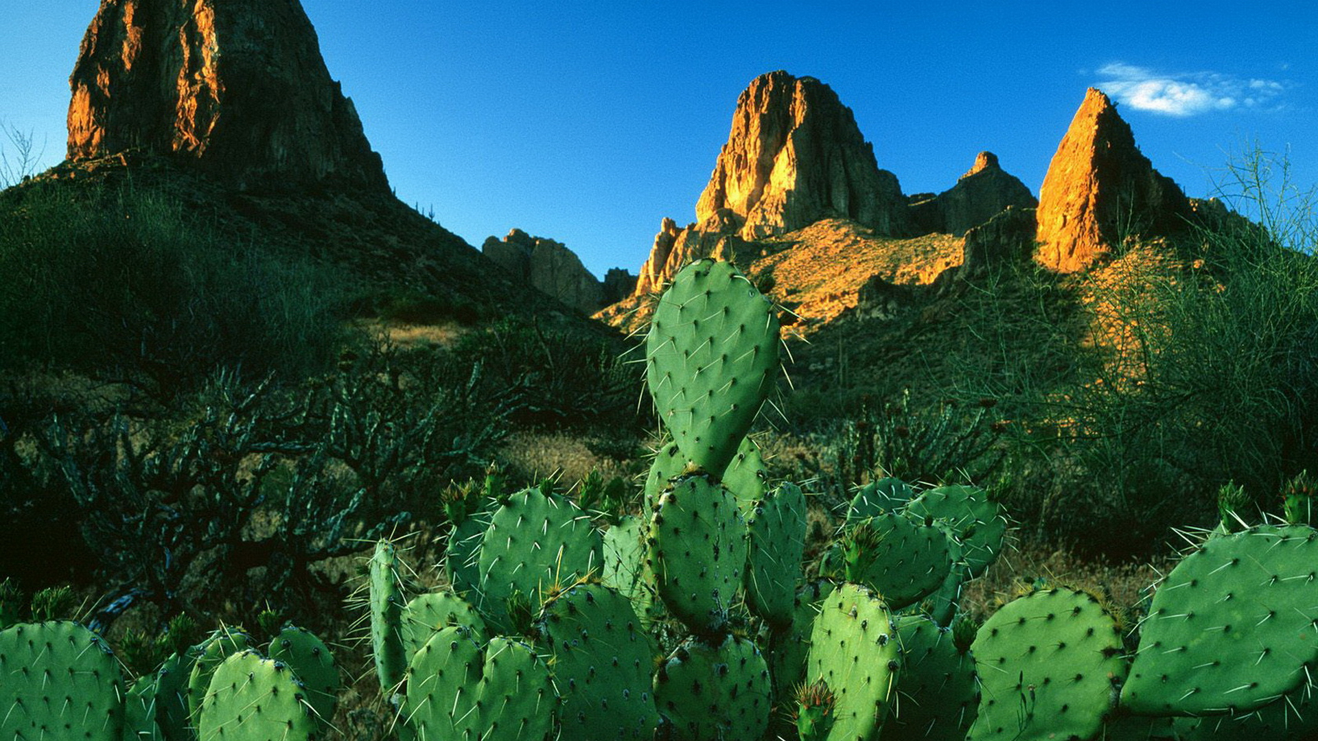 hd cactus wallpapers - photo #33