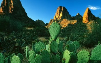 Earth - Cactus Wallpapers and Backgrounds ID : 129128