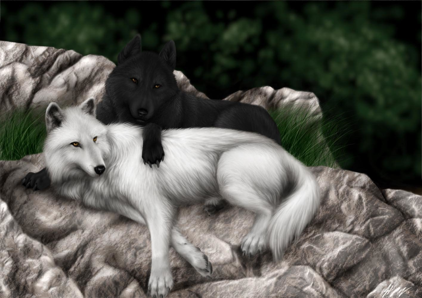 Animal - Wolf  Black White Love Wallpaper