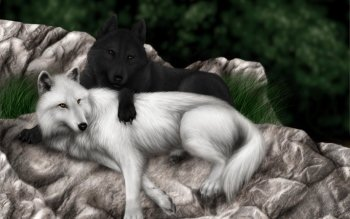 Dierenrijk - Wolf Wallpapers and Backgrounds ID : 140184