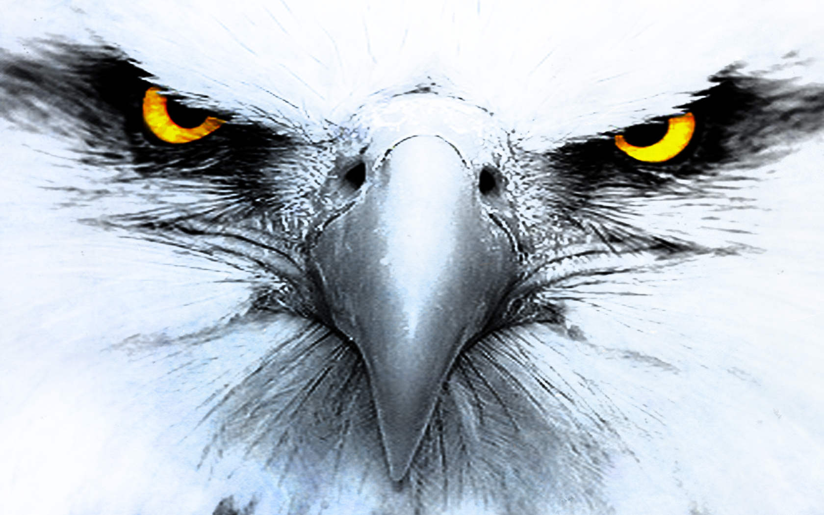 Animal - Eagle Wallpaper
